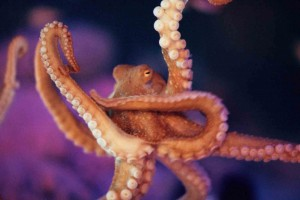 10 Terrific Facts about Octopuses