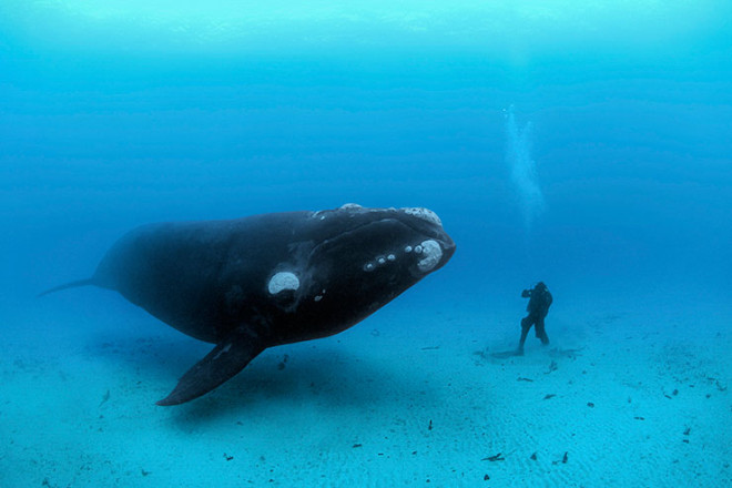 Brian Skerry National Geographic photographer width=