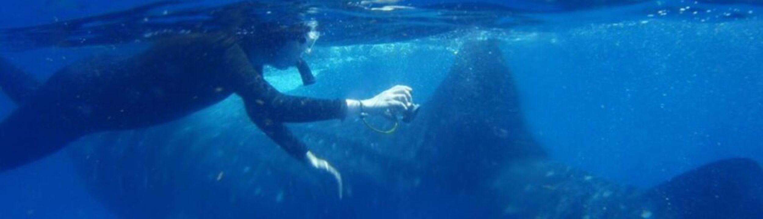 Ocean of Hope
