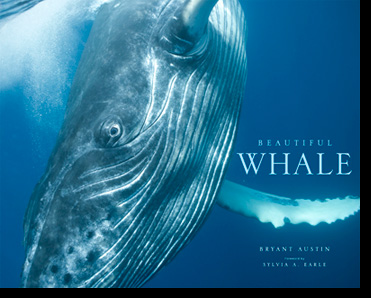 book Beautiful Whale